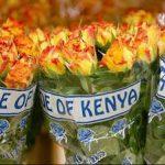 roses-sous-plastique-kenya