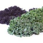 chou-kale-vert-et-rouge